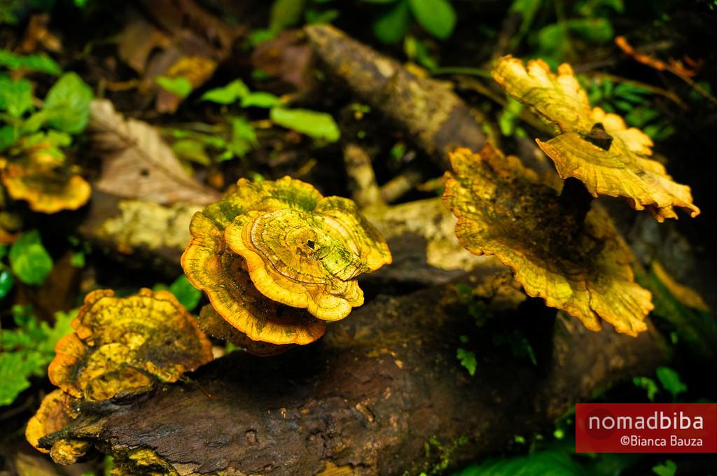 Fungi in Costa Rica