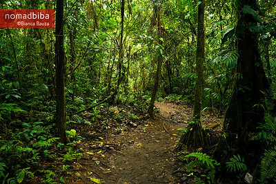 Trail near La Fortuna, Costa Rica