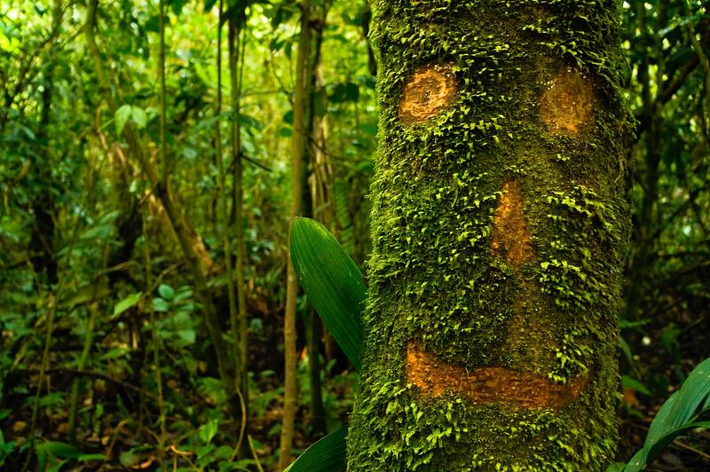 Happy tree in La Fortuna, Costa Rica