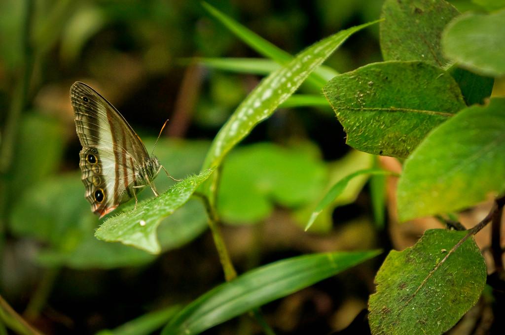 Butterfly in Costa Rica