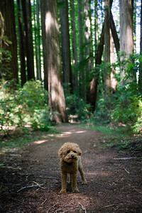 DAISY_COBY_2017_NORCAL_CAMPING_0060