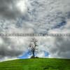 tree_3689