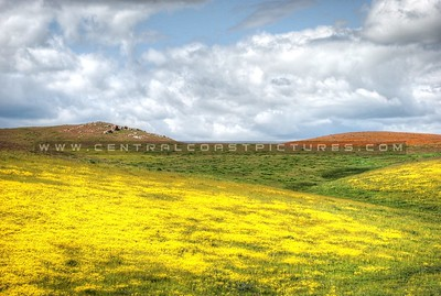 wildflowers_0021