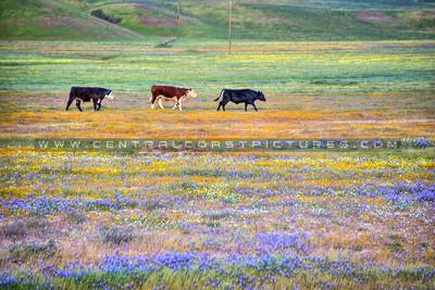 wildflower cow 0970-