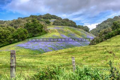 wildflowers 0567-