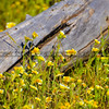 santa margarita wildflowers-3476