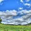 halter-ranch-winery-vineyard_3505