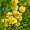 santa margarita wildflowers-3461