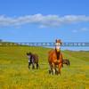santa margarita horses-3494