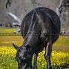 santa margarita wildflowers-3451