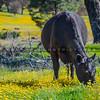 santa margarita wildflowers-ccp-3435