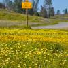 santa margarita sign-3480