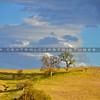 carrizo-plains-6153