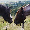 Hawk and Sugar, both 2008 foals, on top of one of the highest hills in the park