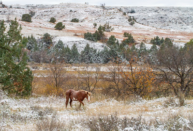 Wild Horse Feral Horse Theodore Roosevelt National Park Medora ND  IMG_2231