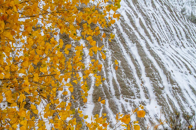Cottonwood leaves and snow-striped cliff Theodore Roosevelt National Park Medora ND  IMG_2079