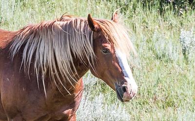 Wild Horse feral horse Theodore Roosevelt National Park Medora NDIMG_0284