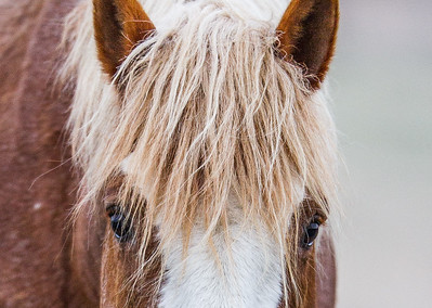 Wild Horse Feral Horse Theodore Roosevelt National Park Medora NDIMG_1022