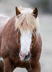 Wild Horse Feral Horse Theodore Roosevelt National Park Medora NDIMG_1020