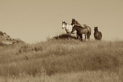 Wild Horses landscape sepia Theodore Roosevelt NP South Unit ND IMG_0008316