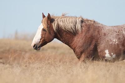 Wild Horses Teddy Roosevelt National Park ND IMG_5366