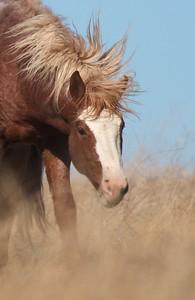 Wild Horses Teddy Roosevelt National Park ND IMG_5297