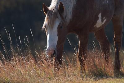 Wild Horses Teddy Roosevelt National Park ND IMG_5442