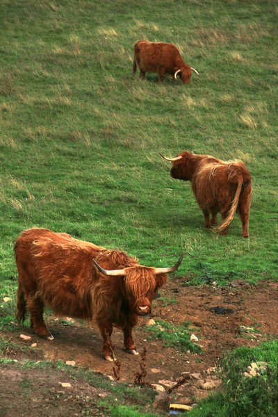 Boddam Coos