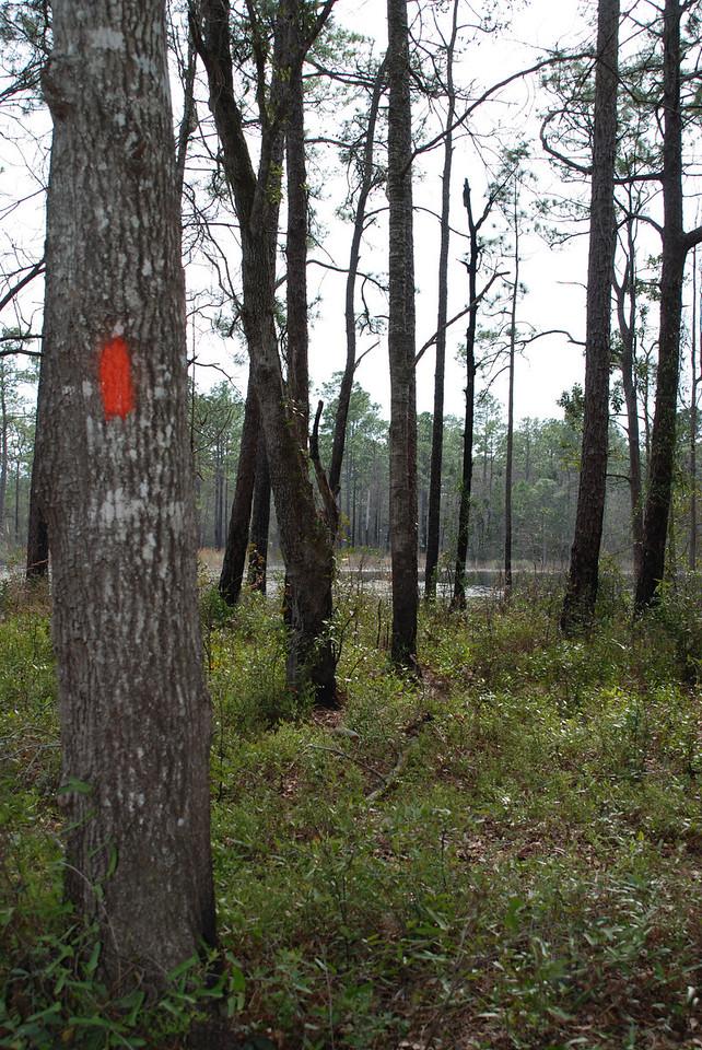 FT near Spring Creek<br /> PHOTO CREDIT: Sandra Friend / Florida Trail Association