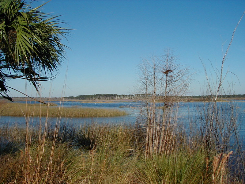 Along the FT at St. Marks NWR<br /> PHOTO CREDIT: Sandra Friend / Florida Trail Association