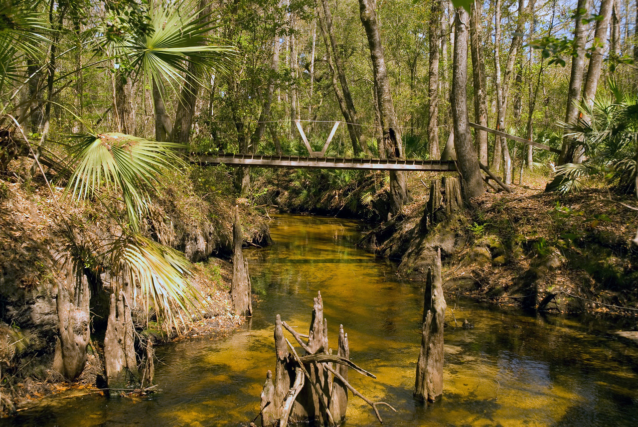 Etoniah Creek State Forest<br /> PHOTO CREDIT: M. Timothy O'Keefe / Florida Trail Association
