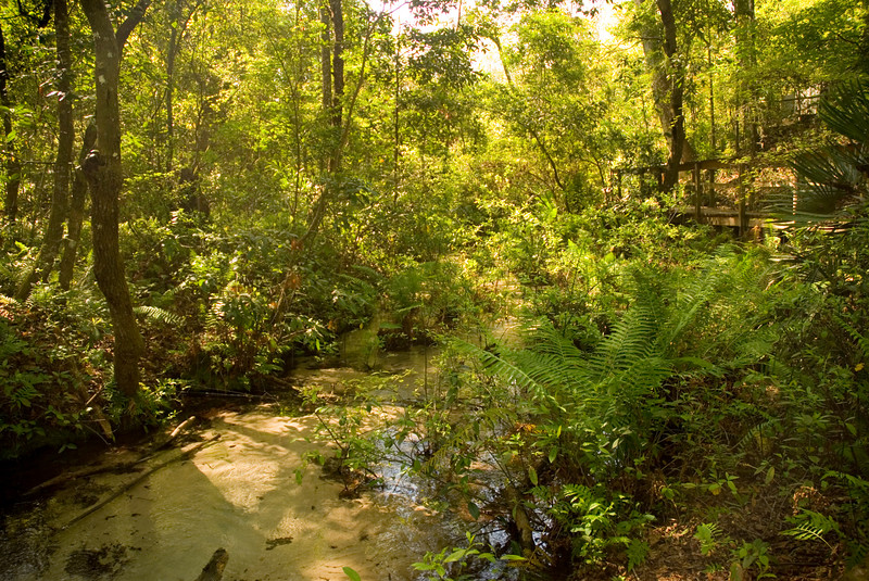 Gold Head Branch<br /> Gold Head Branch State Park <br /> PHOTO CREDIT: M. Timothy O'Keefe / Florida Trail Association