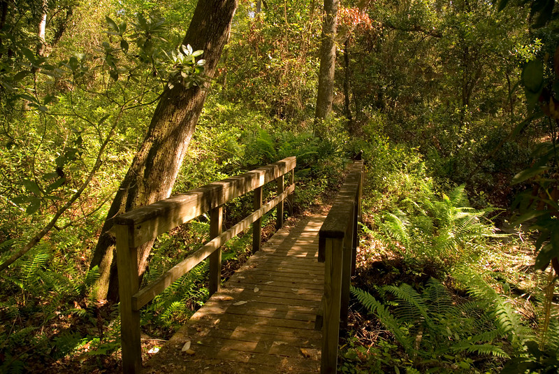 Gold Head Branch State Park <br /> PHOTO CREDIT: M. Timothy O'Keefe / Florida Trail Association