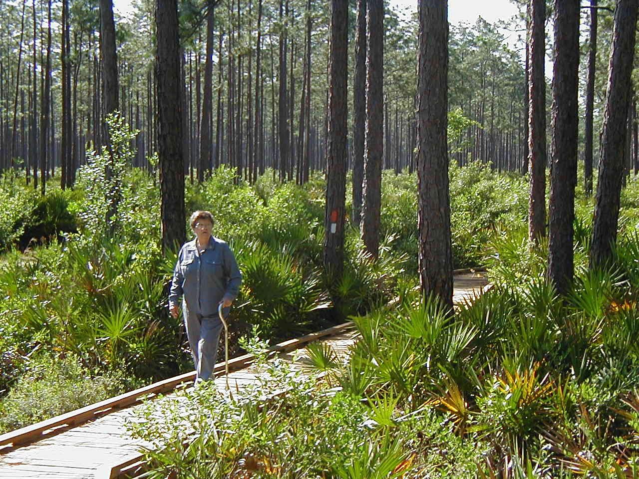 NIce Wander Trail<br /> PHOTO CREDIT: Deb Blick/ Florida Trail Association