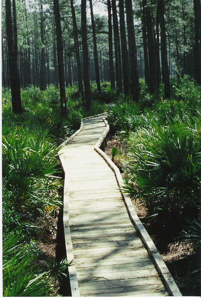 ADA Trail<br /> PHOTO CREDIT: Deb Blick/ Florida Trail Association