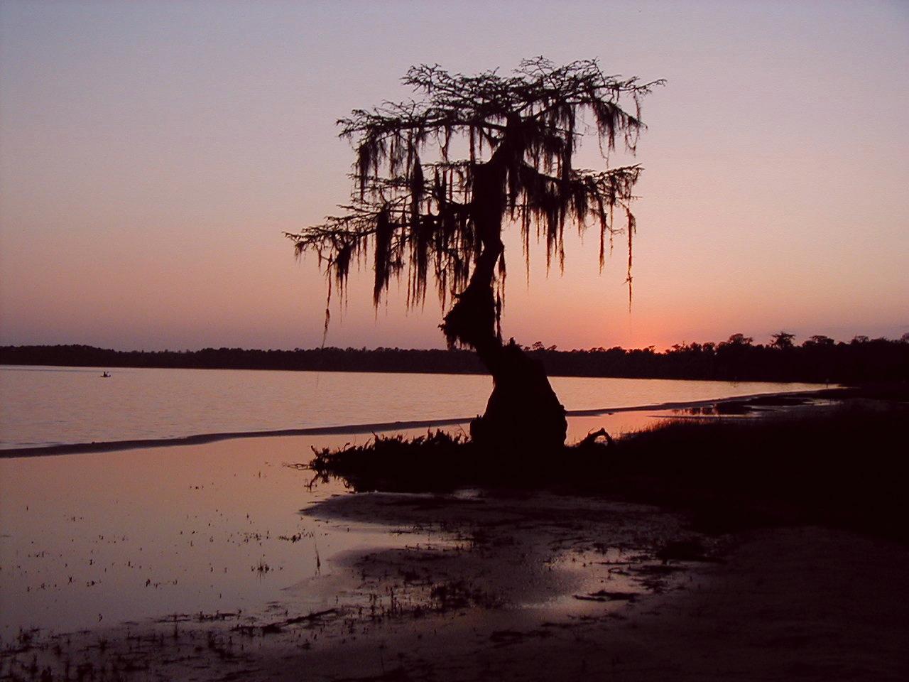 Ocean Pond<br /> PHOTO CREDIT: Deb Blick/ Florida Trail Association