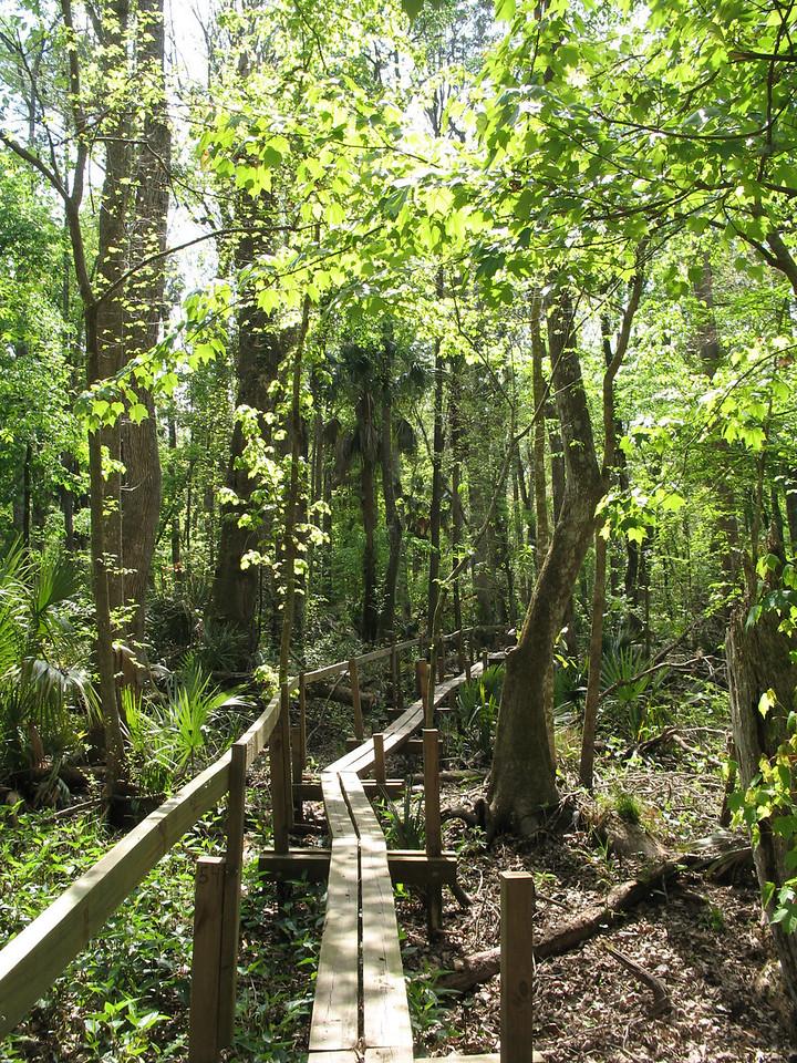 Along the Florida Trail in Rice Creek Conservation Area near Palatka PHOTO CREDIT: Florida Trail Association / Sandra Friend