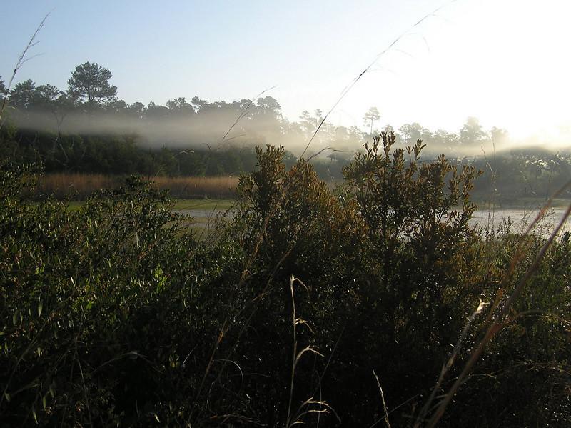 FNST between Hopkins Prairie and Juniper Springs<br /> photo credit: Jack Hailman / Florida Trail Association