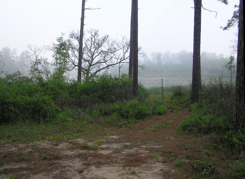 FNST, Penner Pond, Ocala NF, FL<br /> photo credit: Jack Hailman / Florida Trail Association