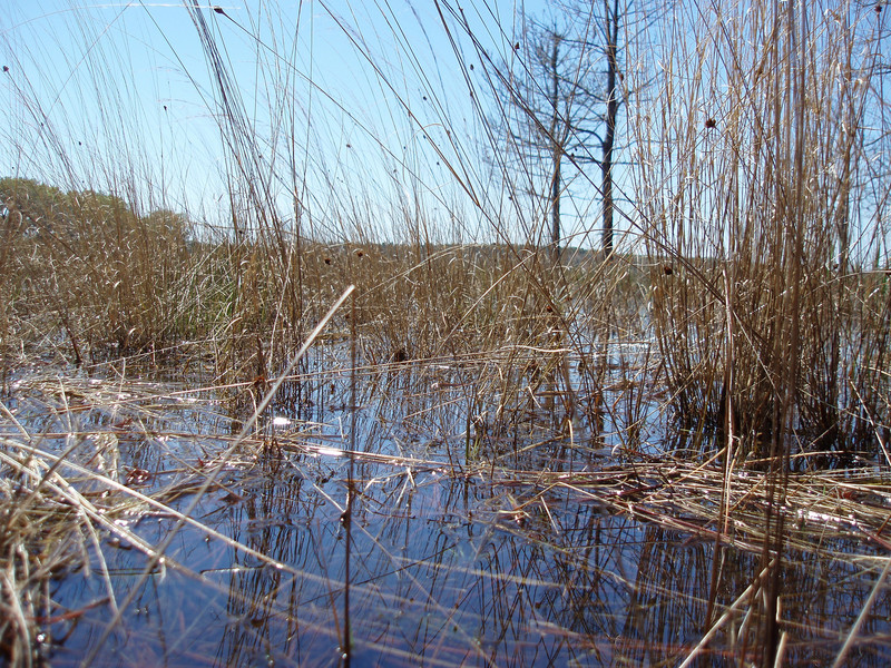 Hopkins Prairie at eye level<br /> photo credit: Robert Coveney / Florida Trail Association