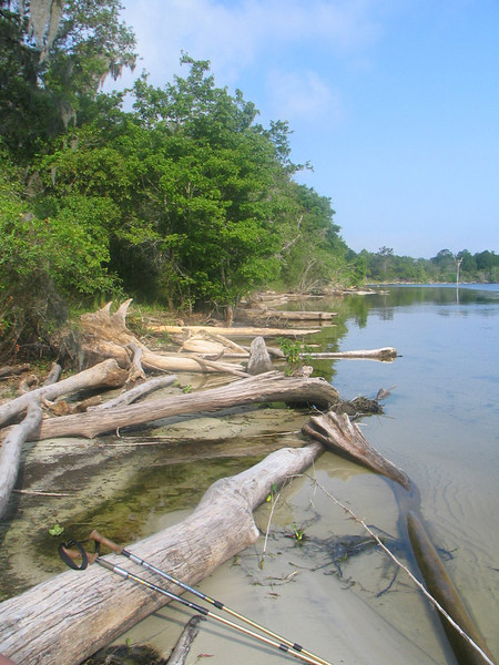 Remains of drowned trees along Rodman Pool<br /> photo credit: Janette Davison/ Florida Trail Association
