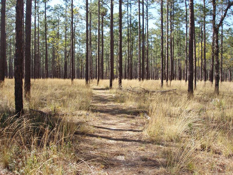 In the sandhills<br /> photo credit: Robert Coveney / Florida Trail Association