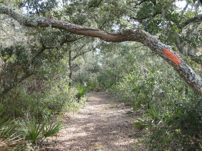 The Florida Trail near Penner Pond<br /> photo credit: Sandra Friend / Florida Trail Association