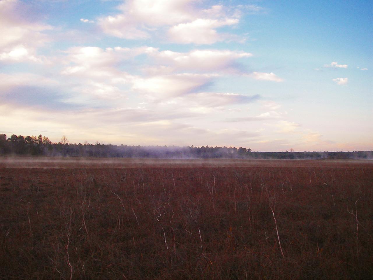 Mist over Hopkins Prairie<br /> photo credit: Deb Blick / Florida Trail Association