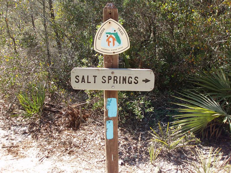 Blue blaze to Salt Springs<br /> photo credit: Robert Coveney / Florida Trail Association