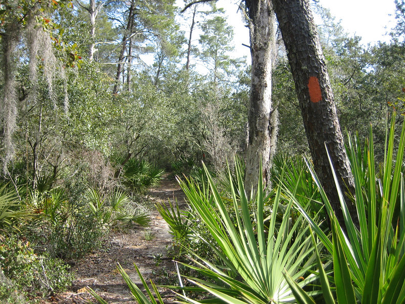 The Florida Trail near Penner Pond<br /> photo credit: Sandra Friend / Florida Trail Association