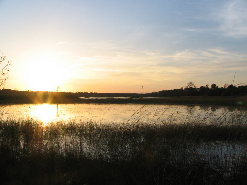 Prairie sunset<br /> photo credit: Janette Davison/ Florida Trail Association