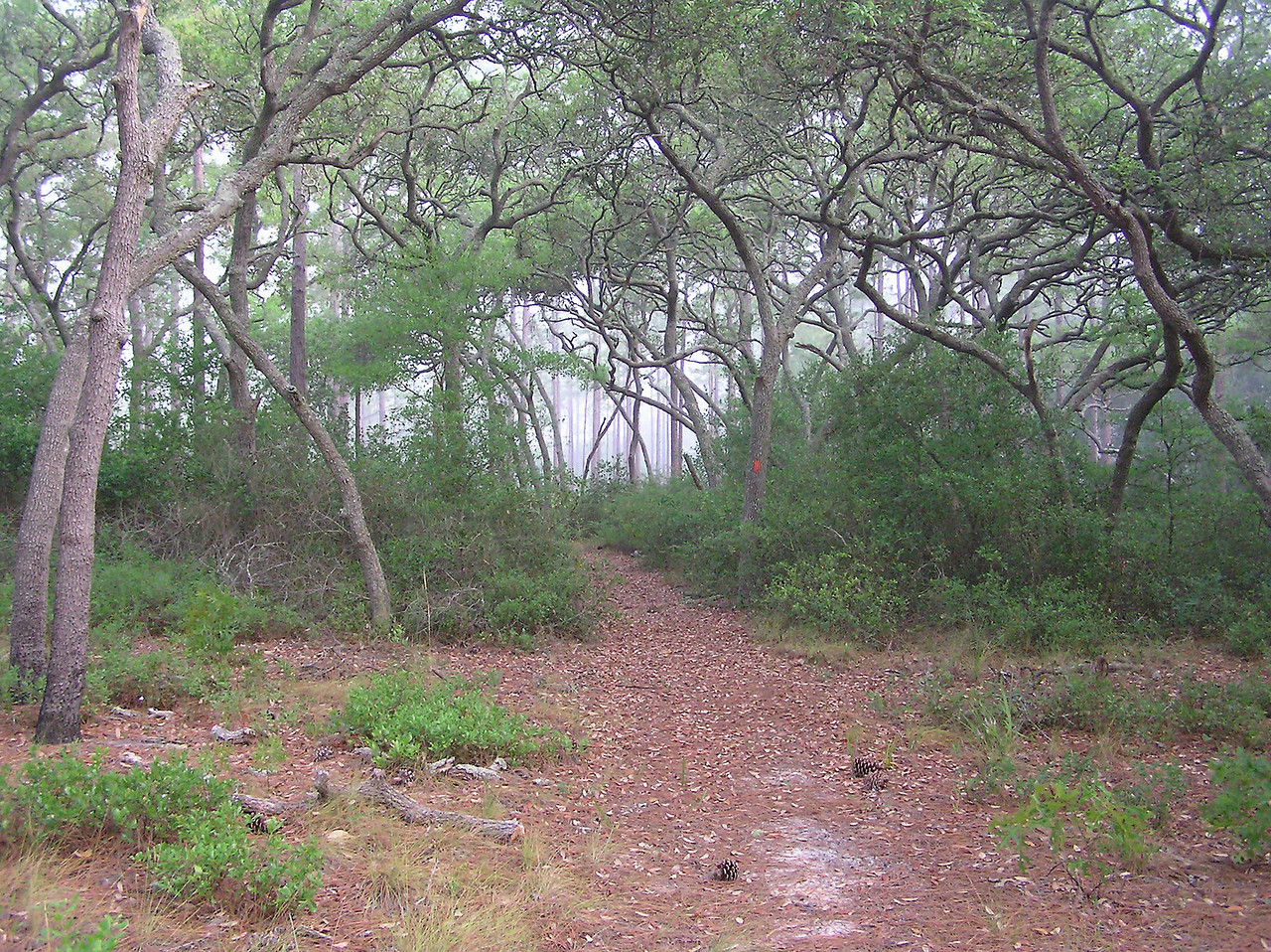Hiking in the Ocala<br /> photo credit: Jack Hailman / Florida Trail Association