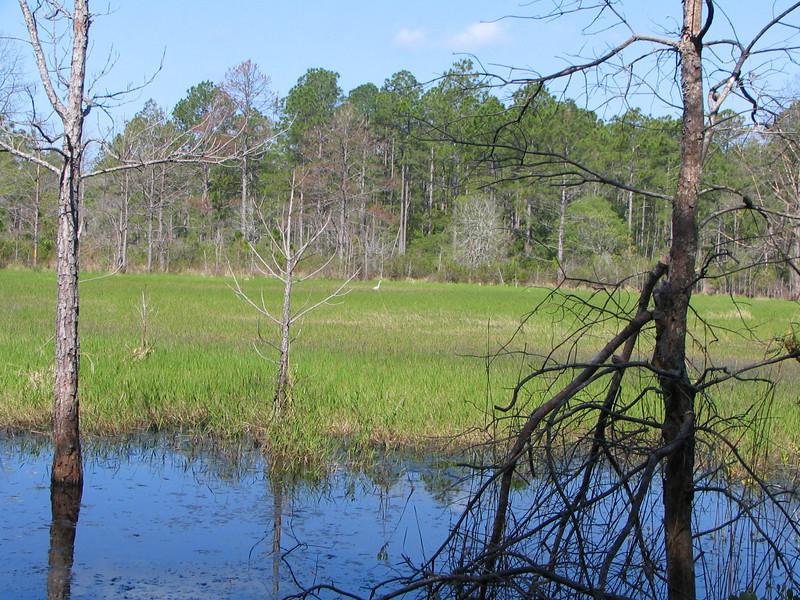 Marsh with egret<br /> photo credit: Janette Davison/ Florida Trail Association