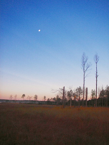 Moon over Hopkins Prairie<br /> photo credit: Deb Blick / Florida Trail Association